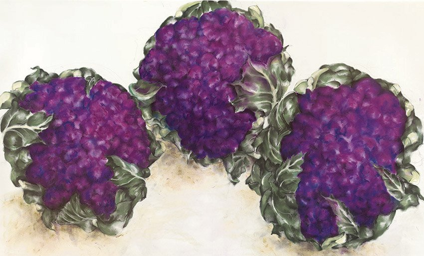"Cauliflower, 2014,pastel on paper, 36"" x 50"""