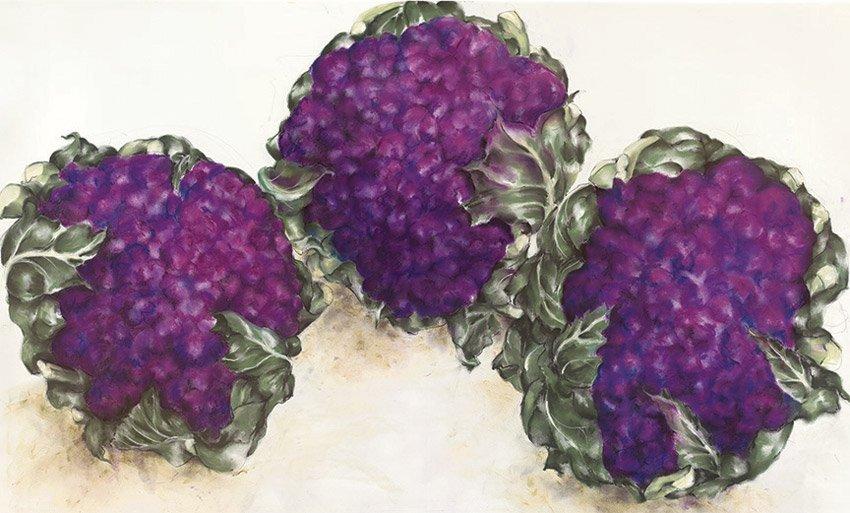 """Cauliflower, 2014,pastel on paper, 36"""" x 50"""""""